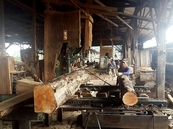 Mikyotech Sdn Bhd Sawn Timber Supplier In Malaysia